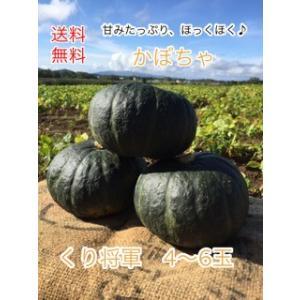 【送料無料】   かぼちゃ 北海道産 かぼちゃ  ≪ くり将軍  4玉〜6玉入 ≫   ≪ 農家直送...