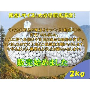 ぎんなんギンナン銀杏L(大分県耶馬溪産)2kg