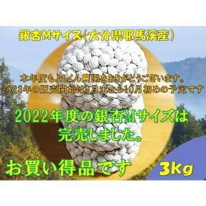ぎんなんギンナン銀杏M(大分県耶馬溪産)3kg