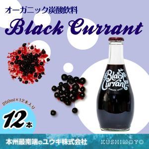 Black Currant(ブラックカラント)|youkico