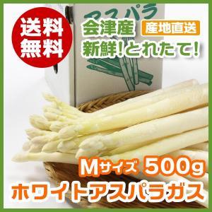 2019新物  今が旬 会津から採り立て直送!! ホワイト アスパラガス Mサイズ 500g 送料無料