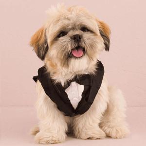 犬 タキシード 結婚式 小型犬用 S|yourstylewedding