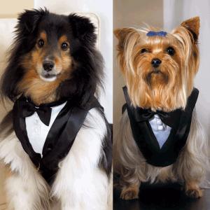 犬 タキシード 結婚式 中型犬〜大型犬用 L|yourstylewedding