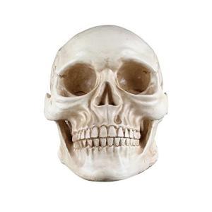 リアルなドクロ・頭蓋骨模型 頭部模型 お部屋や店のインテリアに最適|yu-yu-stoa