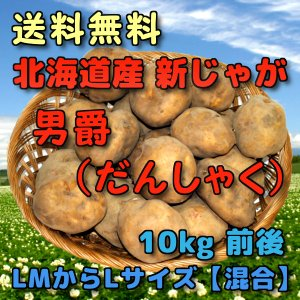 予約 北海道産 新じゃがいも 男爵 10kg 前後 (だんしゃく・ダンシャク)  (LMからLサイズ 【混合】)|yubari-shouten