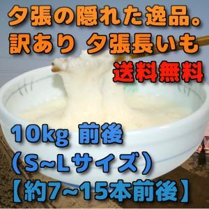 北海道夕張市産 訳あり 夕張長いも 10kg前後 SからLサイズ  約7本から15本前後|yubari-shouten