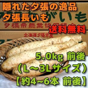 北海道夕張市産 夕張長いも 5kg前後 Lから3Lサイズ 約4本から6本前後|yubari-shouten