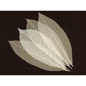 透かし木の葉 10cm 100枚入 (スカシ木の葉) [常温限]|yukawa-netshop