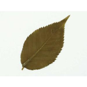 桜の葉塩漬 【青】 S 200枚 (国産 桜葉漬 おうばづけ 緑色 さくら 葉) [冷凍]