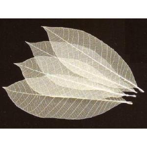 透かし木の葉 25cm 100枚入 (スカシ木の葉) [常温限]|yukawa-netshop