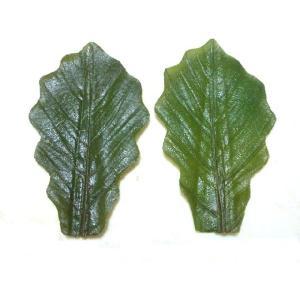 柏葉 ミニ 【グリーン】 100入 (約11×6cm/枚 かしわば かしわ葉 緑色) [冷蔵]|yukawa-netshop