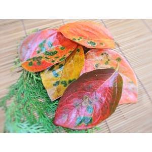 四国産 柿の葉 約10枚 (かきの葉 カキ 国産) [冷蔵] yukawa-netshop