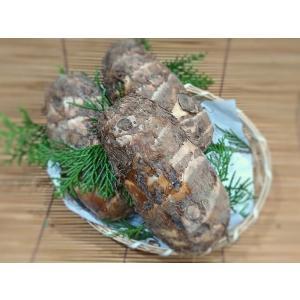 静岡 磐田産 海老芋 Lサイズ 3〜4本入 約1kg (国産 えび芋 えびいも) [常温]|yukawa-netshop