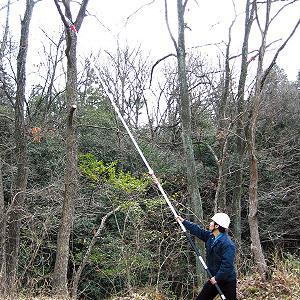 最長6.5mまで伸びるノコギリ 枝打ち一発の関連商品3
