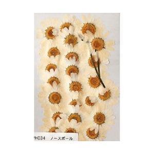 押し花パック フラワー ※ノースポール|yumegazai