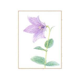 塗り絵物語 野山の花編 ※キキョウ|yumegazai