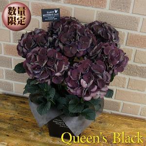 母の日期間限定 塩原さんのオリジナル紫陽花 クイーンズブラック 5号鉢 オシャレなブリキの鉢カバー入り|yummy