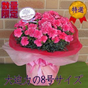 母の日 プレゼント 花 80代 70代 60代 ギフト 特大 カーネーション 鉢植え ボリューム満点 大迫力 8号鉢 ピンク 期間 数量 限定|yummy