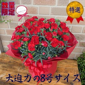 母の日 2021 プレゼント 花 ギフト カーネーション 特大 80代 70代 60代 大きい 鉢植え 花 ボリューム満点 大迫力 8号鉢 赤 期間 数量 限定|yummy