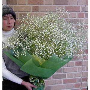 誕生日のプレゼントや結婚記念日のフラワーギフトにもらって嬉しい抱えきれない程のかすみ草の花束でサプライズ|yummy