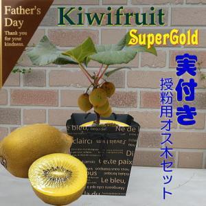 父の日 花 お中元 ギフト プレゼント 栄養満点 育てて楽しく 食べて美味しい キウイフルーツ スー...