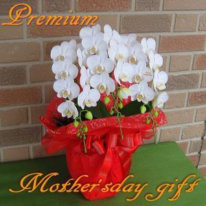 母の日限定 ミディ系胡蝶蘭アマビリス3本立ち 花びらメッセージ入り mothersday0512|yummy