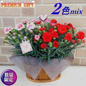 母の日 2021 花 ギフト 鉢植え プレゼント 80代 70代 60代 カーネーション 2色 ミックス 赤 ピンク 4号 バスケット入り|yummy