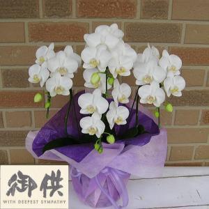 お供えお悔やみ専用 法事法要の贈り物に日持ち抜群のミニ胡蝶蘭の鉢植え アマビリス4本立ち|yummy
