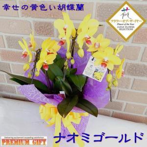 胡蝶蘭 開店祝い 誕生日 プレゼント 花 贈り物 フラワー・オブ・ザ・イヤー 最優秀賞 受賞 黄色 コチョウラン 鉢植え ナオミゴールド 3本立ち|yummy