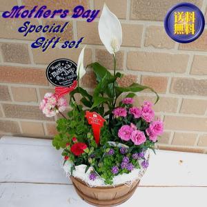 母の日 プレゼント 花 ギフト 鉢植え カーネーション スペシャル 寄せ植え セット バスケット入り|yummy