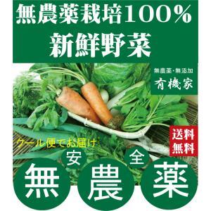野菜詰め合わせセット無農薬 旬の野菜セット 2200円(送料無料・月、金曜日発送)5月より冷蔵便になります。