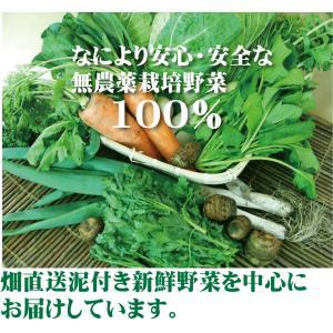 無農薬野菜詰め合わせ 旬の無農薬100%野菜セット 2000円|yuukiya0097|02