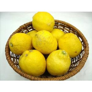 国産 瀬戸内レモン1kg 農薬不使用【11月中旬-5月中旬ころ】