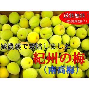 ◆5月下旬より順次発送となります。  ◆和歌山県の森口さんの南高梅。 皮ごと漬ける梅だからこそ、安心...