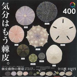 ネイチャーテクニカラー MONO PLUS 棘皮動物の裸殻 マグネット&ボールチェーン 全11種セット いきもん ガチャポン ガチャガチャ ガシャポン yuyou