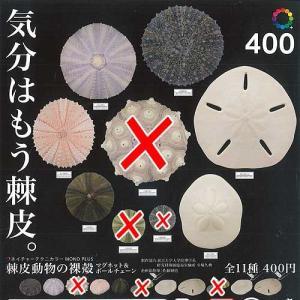 ネイチャーテクニカラー MONO PLUS 棘皮動物の裸殻 マグネット&ボールチェーン 8種セット いきもん ガチャポン ガチャガチャ ガシャポン yuyou