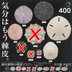 ネイチャーテクニカラー MONO PLUS 棘皮動物の裸殻 マグネット&ボールチェーン 7種セット いきもん ガチャポン ガチャガチャ ガシャポン yuyou