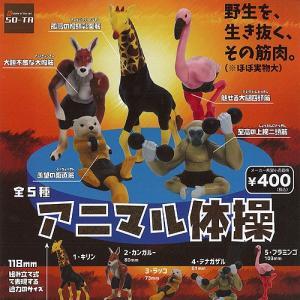 アニマル 体操 全5種+ディスプレイ台紙セット SO-TA 動物フィギュア ガチャポン ガチャガチャ ガシャポン|yuyou