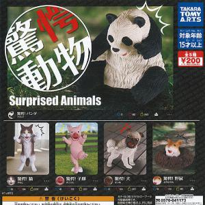 驚愕 動物 全5種セット 2月予約 タカラトミーアーツ フィギュア ガチャポン ガチャガチャ ガシャポン|yuyou