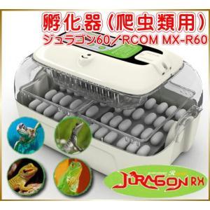 孵化器 爬虫類用 ジュラゴン60/RCOM MX-R60 ペット 動物 飼育 卵|yuyu-honpo