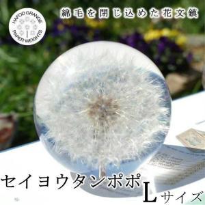 ハフォドグレンジ セイヨウタンポ Lサイズ ポ 花文鎮 フラワー ペーパーウェイト  HG01L|yuyu-honpo