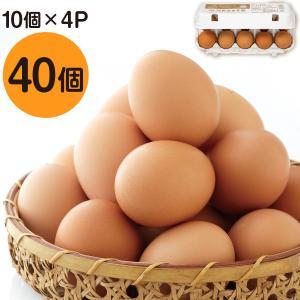 財寶温泉生卵 40個 (10個×4パック) 送料無料 鹿児島県産 鶏卵 たまご 玉子 濃厚 卵黄