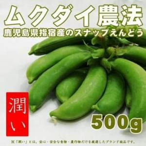 【潤い】ムクダイ農法のスナップえんどう 指宿産 500g【産地直送】 zaka-mmc