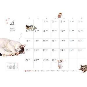 にゃんこのぷにぷに肉球カレンダー2020 (インプレスカレンダー2020)