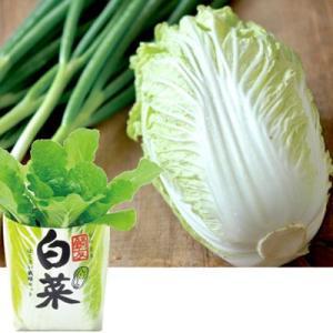 野菜を育てる栽培セット 白菜栽培セット 鍋友 はくさい