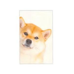 ひょっこり ポチ袋 5枚セット (柴犬)|zakkahibinene