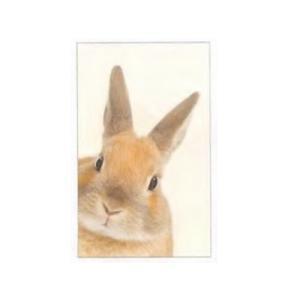 ひょっこり ポチ袋 5枚セット (ウサギ)|zakkahibinene