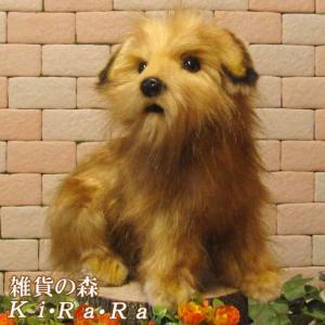 犬の置物 ノーフォークテリア リアルな犬のぬいぐるみ いぬ イヌ ドッグ 動物 アニマル オブジェ 雑貨 フィギュア モチーフ インテリア|zakkakirara