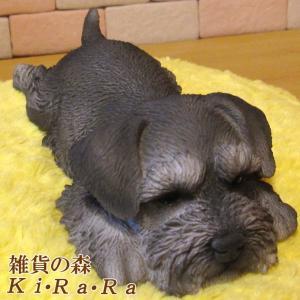 シュナウザー リアルな犬の置物 ウトウト・ねむねむ 子いぬのフィギア イヌのオブジェ ガーデニング 玄関先 陶器|zakkakirara