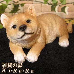 犬の置物 柴犬 リアルな犬の置物 寝そべりシバ 子いぬのフィギア しばイヌのオブジェ ガーデニング 玄関先 陶器 しばけん|zakkakirara